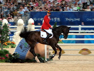 Westphalian horse - The Westfalen All Inclusive competing in show jumping with Ludger Beerbaum at the 2008 Olympic Games.