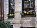 2011 windowbox MarlboroughSt BackBay BostonMA September IMG 3772.jpg
