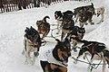 2012 Iditarod (6950513085).jpg