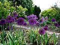 2012 kveten botanicka zahrada 046.JPG