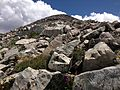 2013-07-14 13 26 56 Alpine wildflowers near the summit of Wheeler Peak in Great Basin National Park.jpg