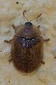 2013. Insecto. Vilarromarís-1.jpg