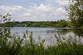 2015 05 24 Deutschland Baden-Württemberg Landkreis Sigmaringen Naturschutzgebiet Zielfinger Vogelsee (4).jpg