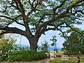 2016 02 FRD Caribbean Cruise Romney Manor S0646461.jpg
