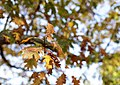2016 Fall Color- Week of 10-17-10-21 (29840079243).jpg