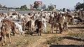 2017-03-05 101559 New Delhi - Jaipur anagoria.jpg