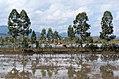 20171116 Ponds near Phonsavan, Laos 2952 DxO.jpg