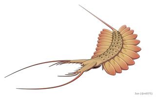 Kerygmachela Extinct gilled lobopod