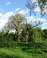 2 Дерева.jpg