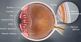 A detailed depiction of eye using a 3D medical illustration