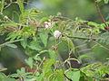 4 flower 4.JPG