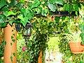 A@a Kyproulas garden askas34 Cyprus - panoramio.jpg