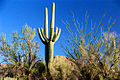 A091, Saguaro National Park, Arizona, USA, 2004.jpg