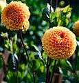 ADD SOME COLOUR TO YOUR LIFE (FLOWERS IN A PUBLIC PARK)-120113 (29194459921).jpg