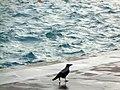 A bird in sea side.jpg