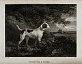 A pointer dog is standing in a forest looking at a hare hidi Wellcome V0020929.jpg