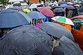 A sea of umbrellas (48914617303).jpg