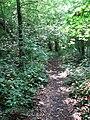 A shady woodland path - geograph.org.uk - 1384168.jpg