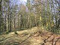 A strip wood at Leahaugh Bank - geograph.org.uk - 378455.jpg