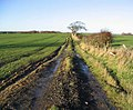 A track through arable fields - geograph.org.uk - 285178.jpg