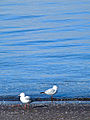 Abaconda tauranga birds.jpg