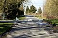 Abbess Roding domestic Emden geese - Essex England 02.jpg