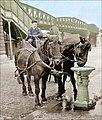 Abreuvoir pour chevaux et chiens à Paris vers 1900.jpg