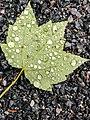 Acadia National Park (2afe178b-3ee3-469c-8dbc-ee4ef67964c8).jpg