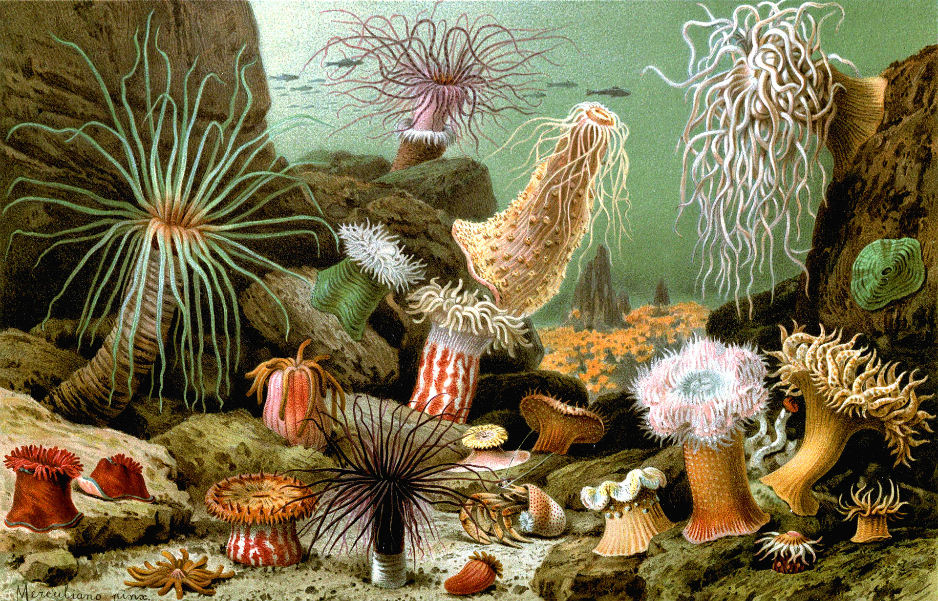 sea anemones Life in the sea is filled with beauty, intrigue, and evidence for an amazing creator  sea anemones and sea slugs are beautiful from an artist's standpoint, giving.