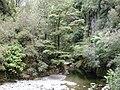Akatarawa River West in Karapoti Gorge.jpg