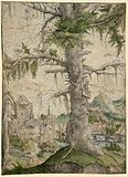 Albrecht Altdorfer - Small Spruce (hand-coloured) Albertina DG1926-1778.jpg