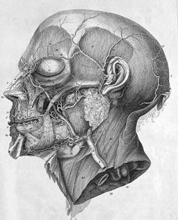 Albrecht von Haller icones anatomicae head