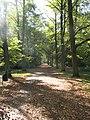 Alejka w Parku Grabiszyńskim - panoramio.jpg
