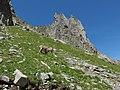 Alpine Ibex (Bouquetin) @ Path from L'Index to Col de la Gliere @ Hike to Lacs des Chéserys, Lac Blanc, Lac Cornu & Lacs Noirs @ Chamonix (15361182232).jpg