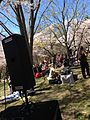 Ambient music in High Park (8711591555).jpg