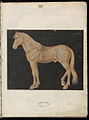 Animal drawings collected by Felix Platter, p2 - (143).jpg