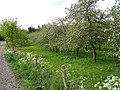 Apple orchard by Tiddesley Wood - geograph.org.uk - 1301488.jpg