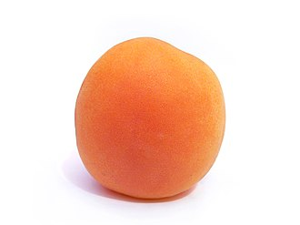 Shades of orange - An apricot fruit