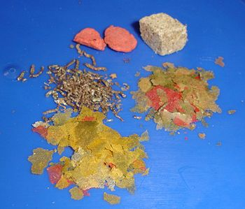 Aquarium - Dried foods for fishes