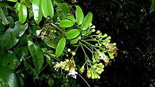 где образуются семена у цветковых растений