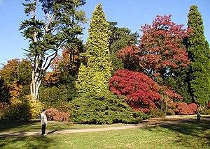 Arboretum - Autumn colours at Westonbirt Arboretum, Gloucestershire, England