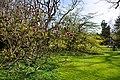 Arboretum Zürich 2015-04-13 17-09-46.JPG