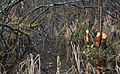 ArdennesRecépage 0028.JPG