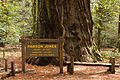 Armstrong Redwoods State Natural Reserve - 02.jpg
