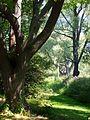 Arnold Arboretum - Aug 2005 (c).JPG