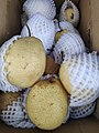 Asian Pear .jpg