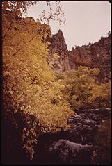 Aspen Leaves Flutter Along the East Rifle Creek, 10-1972 (3815037553).jpg