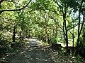 Asurankundu Forest - panoramio (4).jpg