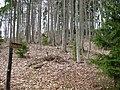 Augstrozes Krusta kalns (2).jpg