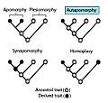 Autapomorphy.jpg